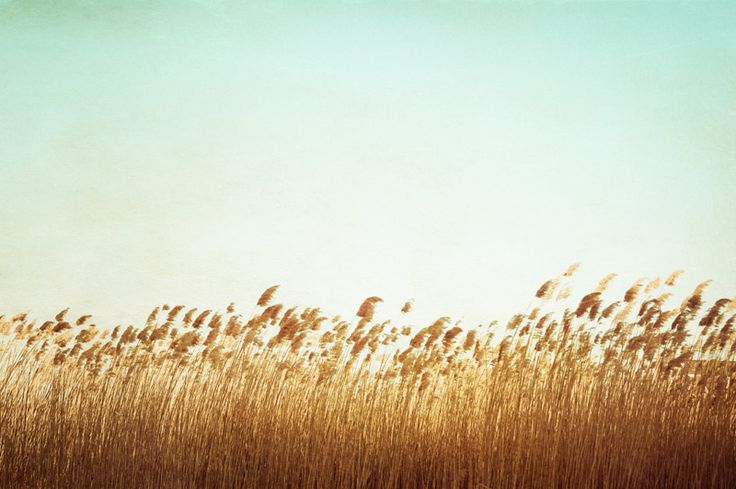 Walk through a wheat field