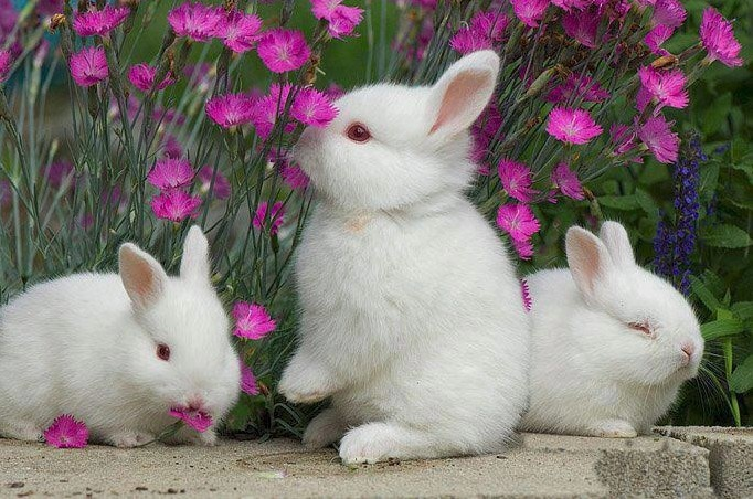 flowers and bunnies - how much springier can you get?