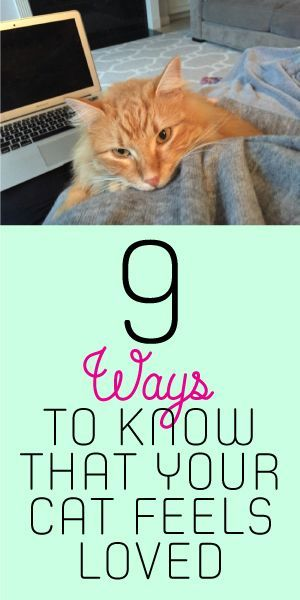 9 Ways To Know That Your Cat Feels Loved <3