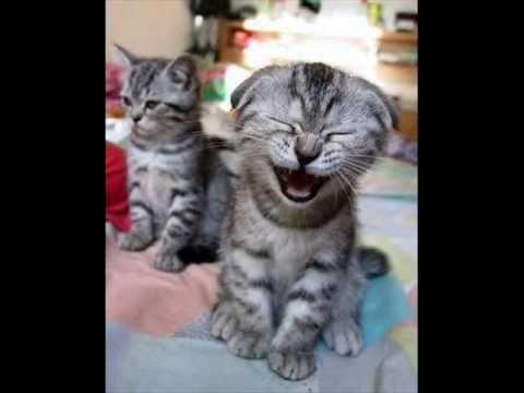 Die lachende Katze