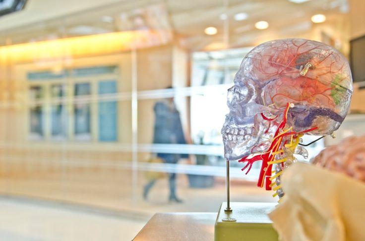 Про трьох найпоширеніших міфах про мозок читайте в новій статті від Psychologies.Today