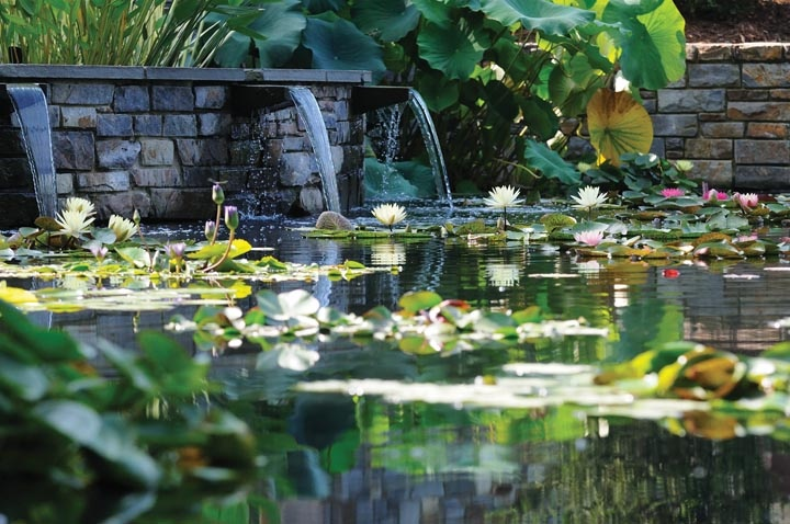 In my garden there is a deserted pond, I want him to ennoble...gardens.duke.edu