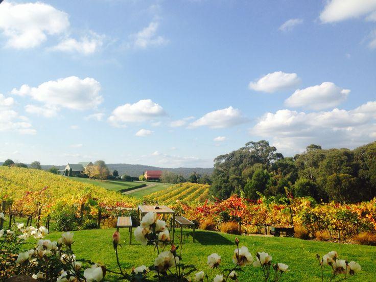 Toms Cap Winery,Gippsland