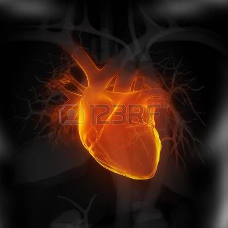 Направлена на человеческое сердце photo