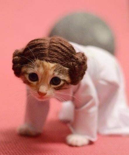 "This poor kitten looks so sad ""Help me Obi Wan!"" 