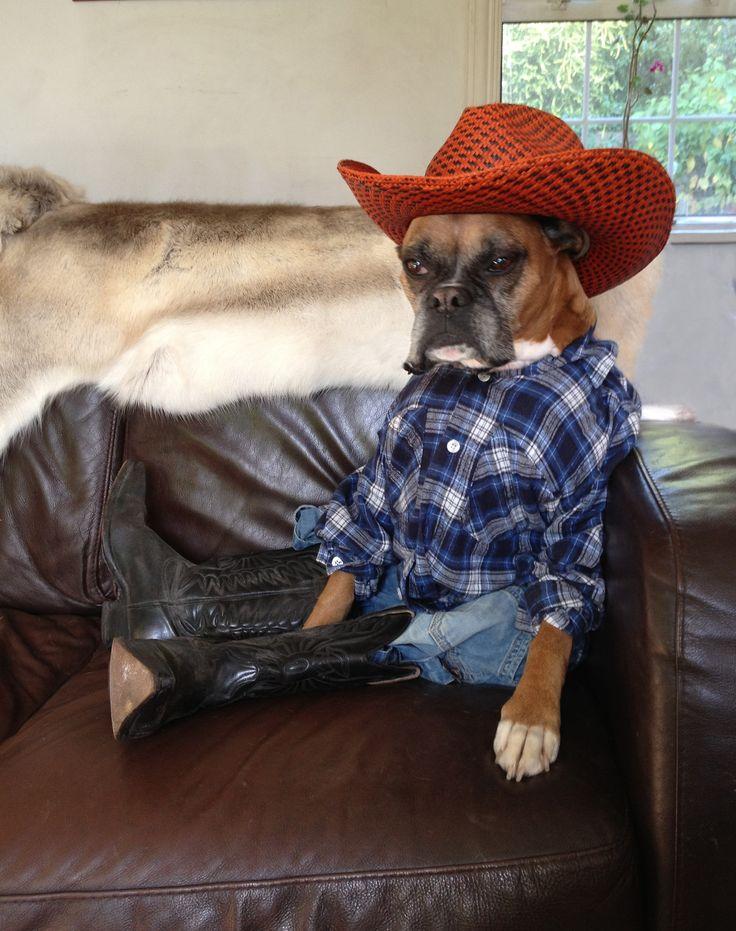 Lettin Doggy Und Als Cowgirl