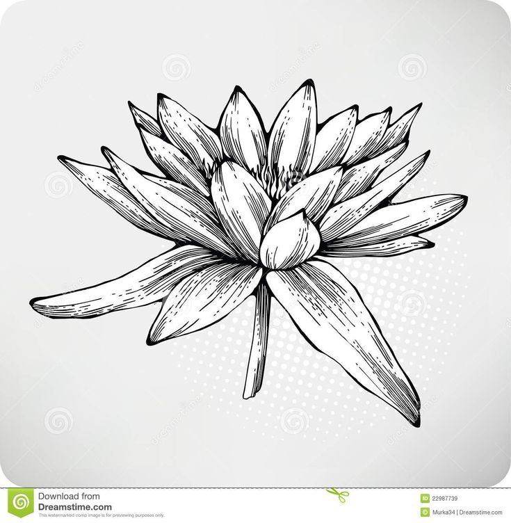 Line Art Lily : Best images about flowers on pinterest drawings