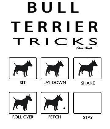 .....when you are trying to show off how smart your Bull Terrier is in front of your friends!!!