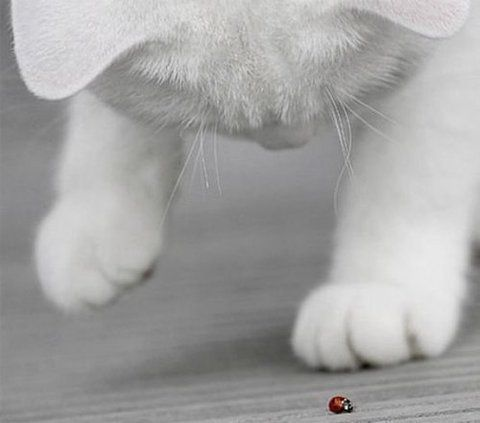 ladybirds can be so fascinating...Animal Pictures, Kitty Cat, Ladybugs, Photos Baby, Baby Pictures, Dogs Pictures, Lady Bugs, Cat Photos, White Cat