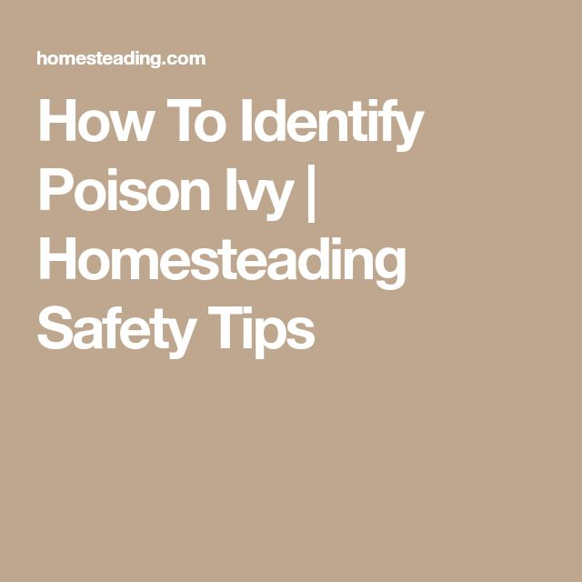 How To Identify Poison Ivy | Homesteading Safety Tips