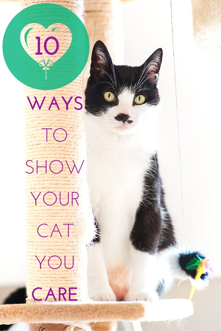how to take good care of your cat