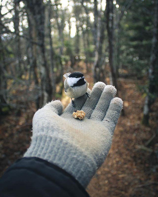 From @riley_jensen_photo  Made a new little friend the other day   #explorenb #explorecanada #saintawesome     #newbrunswick #thankyoucanada #mycbcnb #enjoycanada #imagesofcanada #canadiancreatives #vicivisuals #canadaday #eastcoastlifestyle #noisenb #tourcanada #adventurenarrative #natgeography #birds #Thegreatoutdoors #sharecangeo #wildernesslifestyle #cangeotravel #thenortheastcollective #americancreatives #atlanticnortheast #thediscoverer