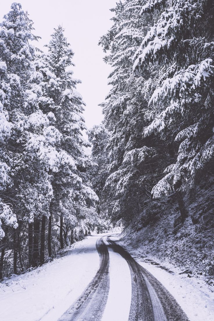 """el-mo-fo-to: """" wonderland・series i 