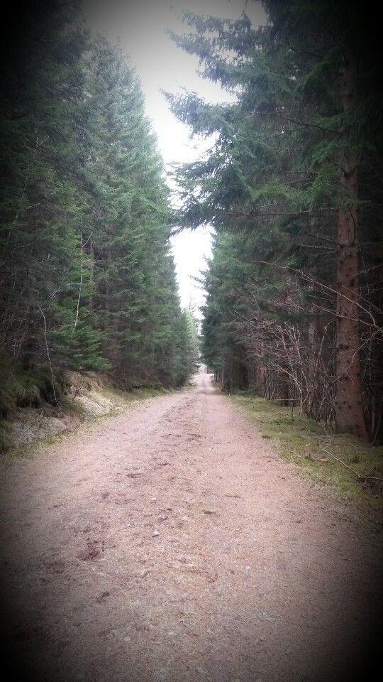 Furuskogen