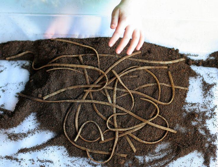 Super Easy Sensory Play:  Dirt and Worms from Fun at Home with Kids
