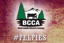 BCAA Felfies