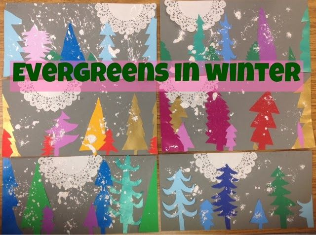 Evergreens in Winter
