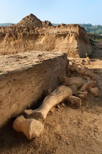 découverte rare en France d'un Mammouth presque complet en Seine et Marne-Plan sur l'un des humérus du mammouth