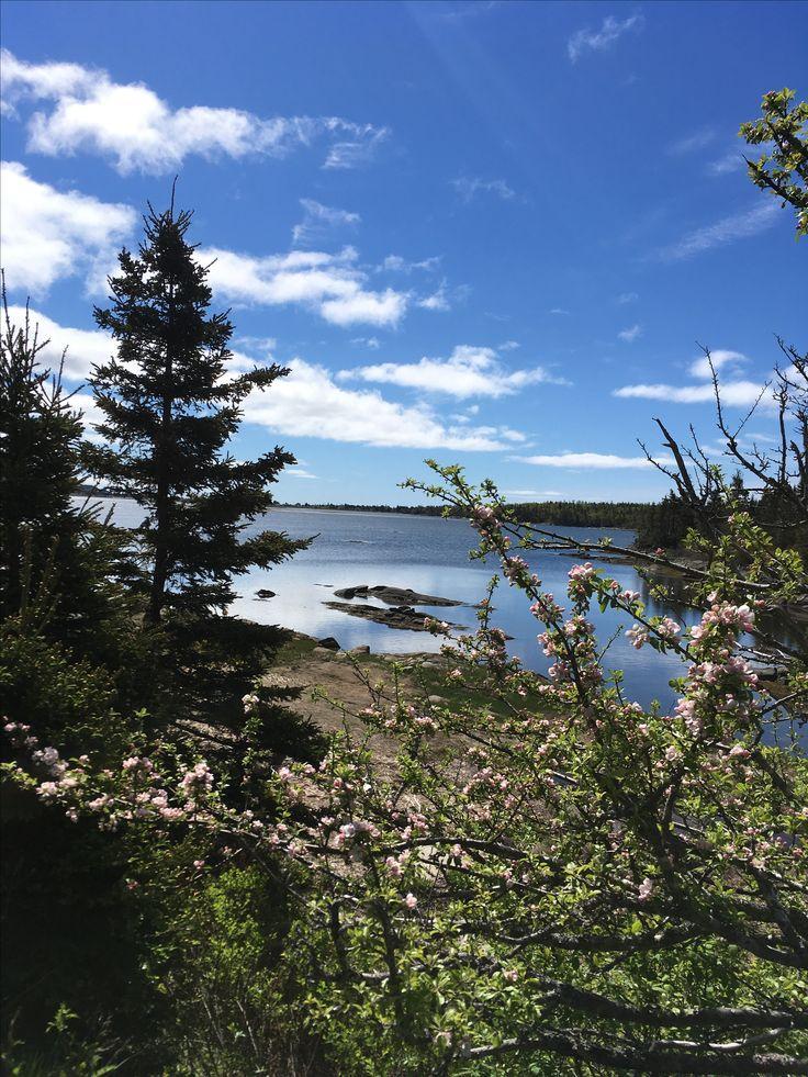 Cole harbour salt marsh trailway