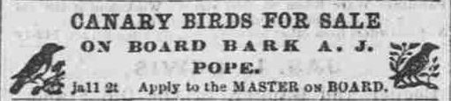 https://flic.kr/p/EpzHmw Canary birds for sale Pacific commercial advertiser, January 11, 1871, Image 2 chroniclingamerica.loc.gov/lccn/sn82015418/1871-01-11/ed-...  Hawaii Digital Newspaper Project hdnpblog.wordpress.com/