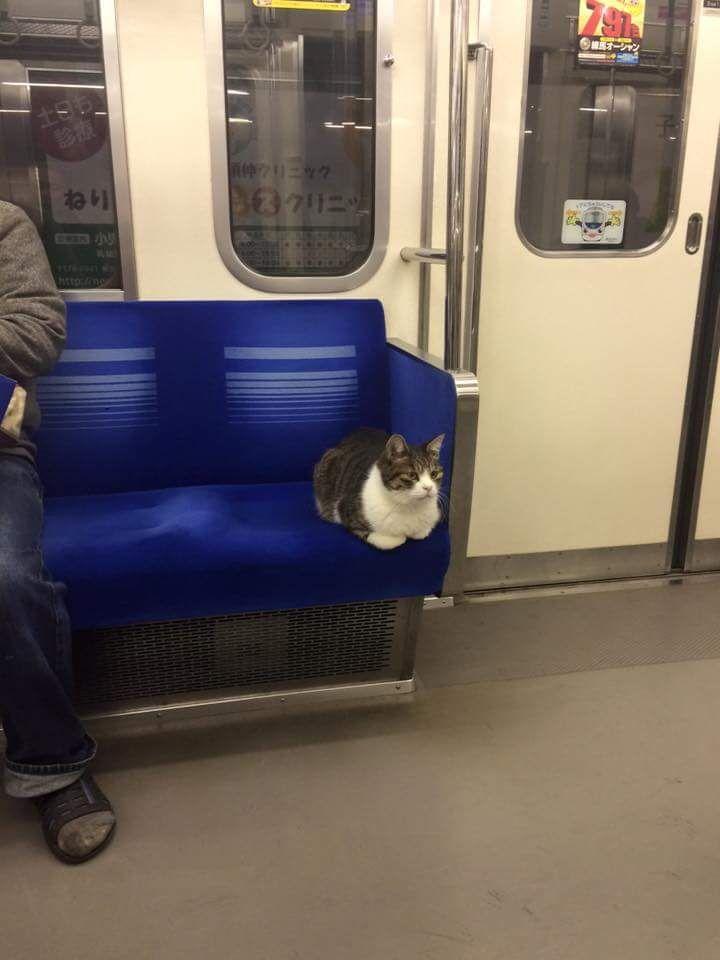 電車に乗る猫