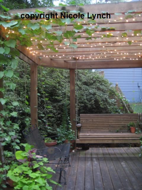 String Some Lights And Run Some Morning Glory Vines Up Some Twines To The  #pergola