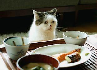 """まこたん  (Not sure of the translation here... could be """"Where's the wasabi?"""""""