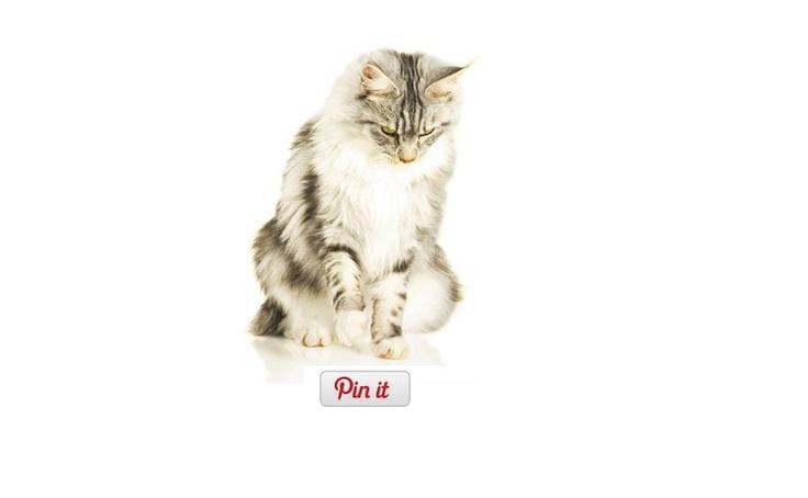 """Sustin proiectul """"Pisicile au cucerit Internetul"""" si sunt pregatit cu cele mai bune sfaturi despre nutritie."""