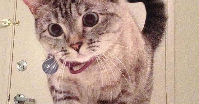 Gambar Kucing Yang Sangat Lucu Foto Kucing Lucu Menggambar Kucing Kucing
