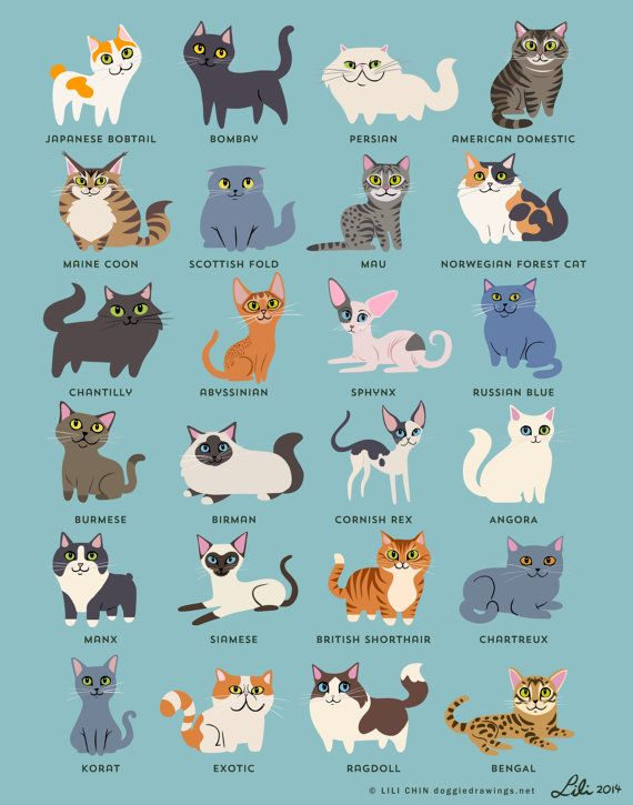 Original illustrations by me (Lili Chin, doggiedrawings.net) featuring 24 cat breeds. This is printed with Epson archival inks on 60lb premium