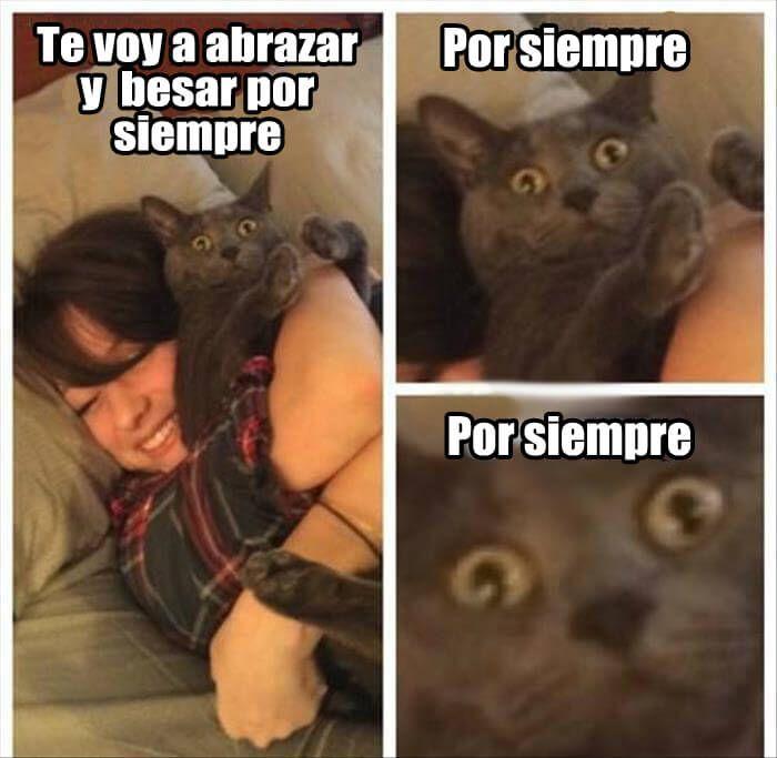 gatos con frases chistosas para facebook