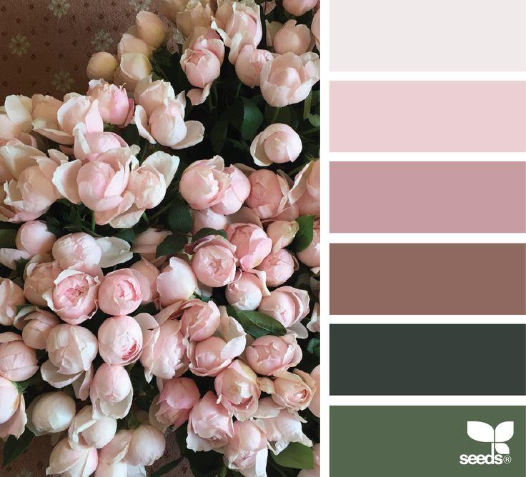 цвет увядшей розы фото с чем сочетается задача