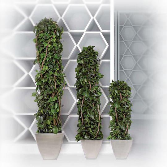 Totem Hedera Stabilizat 1.6 m  #plante #stabilizate #nemuritoare #preserved #plants #totem #hedera