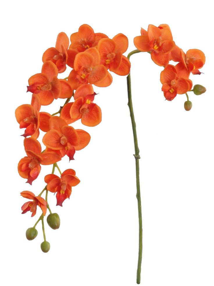 "Dancing Silk Orchid Stem in Orange 22"" Tall"
