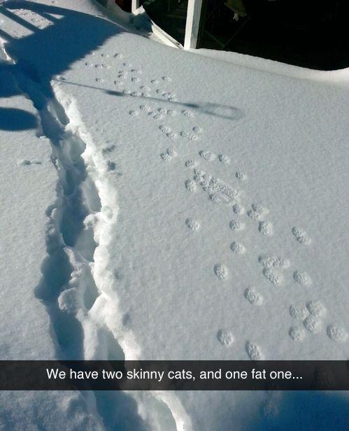 Snow tracks  funny tumblr [via lolsnaps]