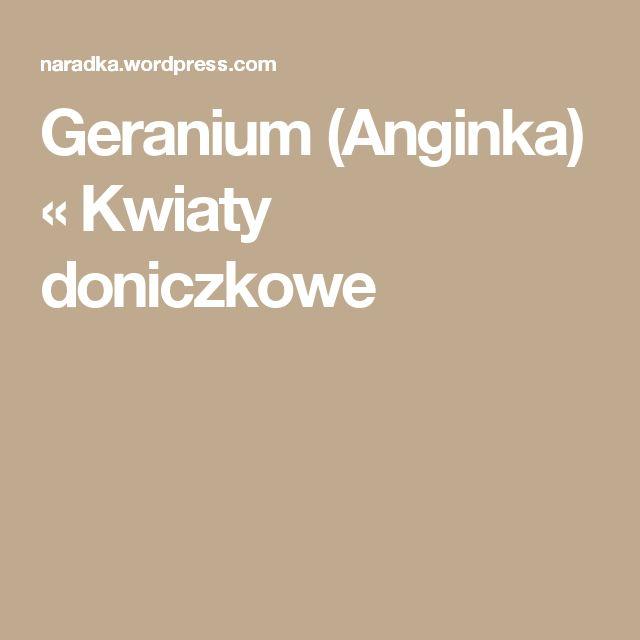 Geranium (Anginka) « Kwiaty doniczkowe
