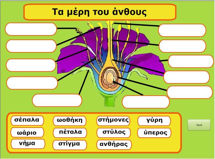 Τα μέρη του άνθους (παιχνίδι): Οι παίκτες σύρουν στην κατάλληλη θέση τις λέξεις για τα μέρη του άνθους.Θα το βρείτε στη σελίδα http://www.cyprusbiodiversityforkids.com/