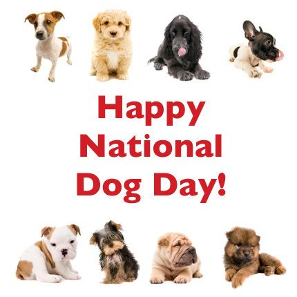 Happy National Dog Day from your friends at Pet Eden! http ...