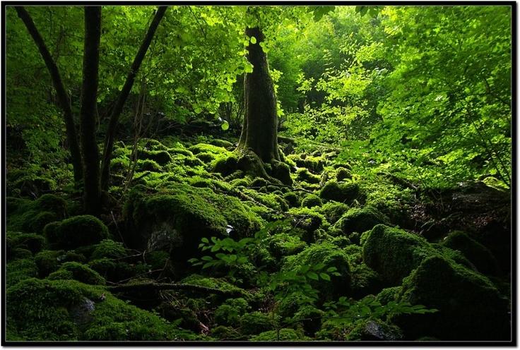 Mt. Ryokami in Japan  2011. 8
