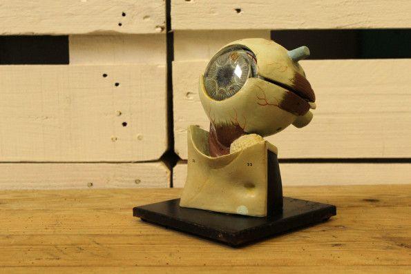 Globo ocular anatómico desmontable 250,00 € Globo ocular didáctico desmontable, España, años 70.