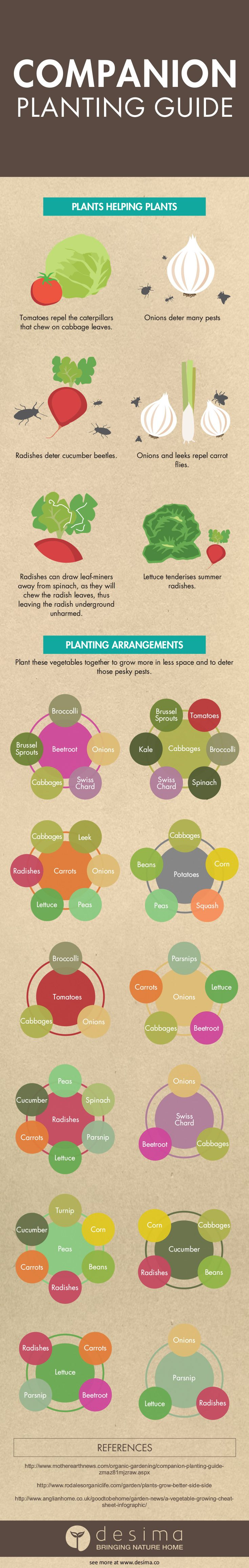 Companion planting guide infographic                                                                                                                                                      More