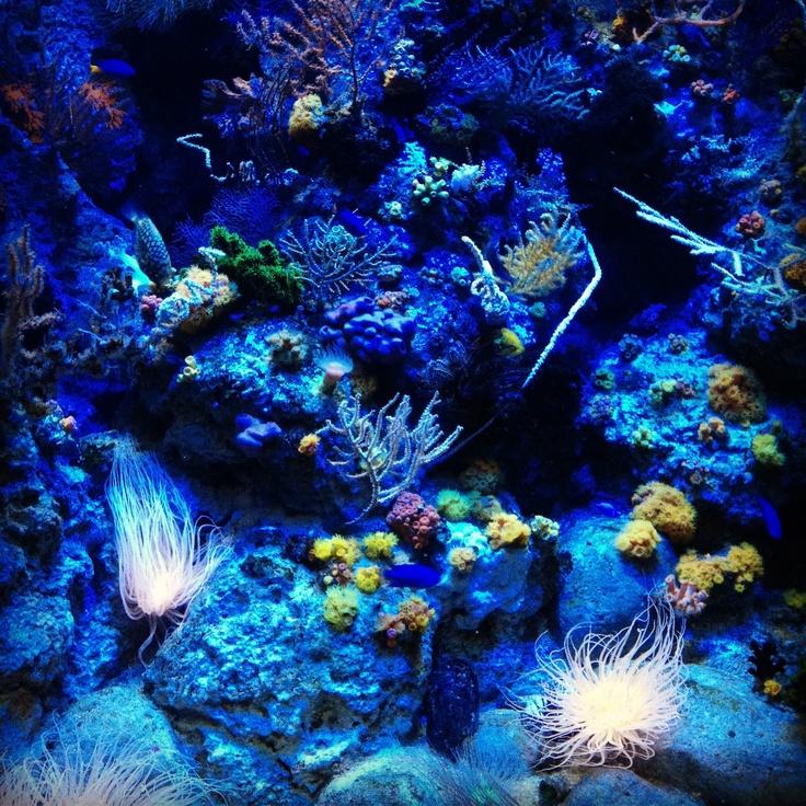 S.E.A Aquarium, Singapore