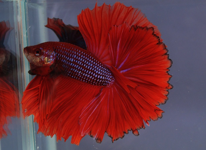 how to take care of tropical fish tank