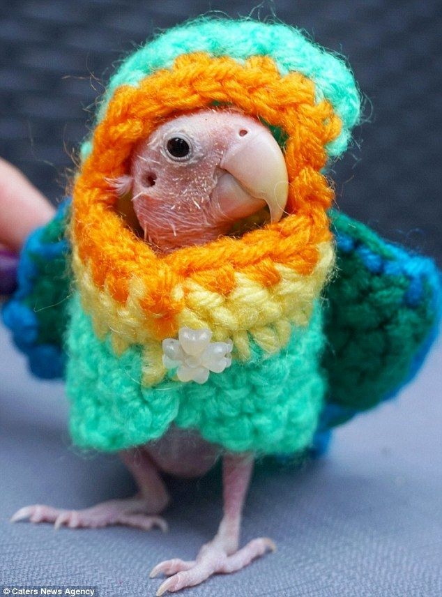 This adorable featherless bird has won the hearts of thousands after a virus made her bald