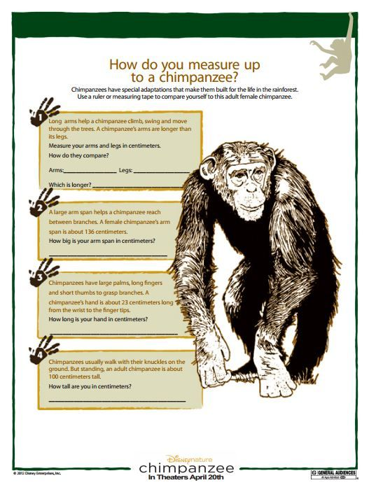 Chimpanzee Family Activity Book Fun For Kids Pinterest