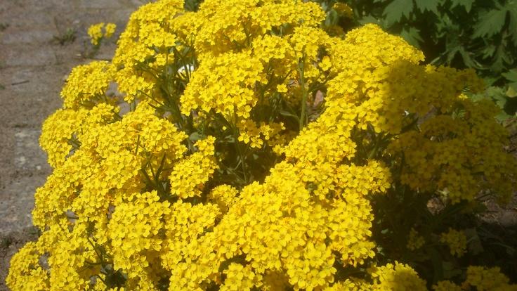 Kwiaty pod krzyżem Chwaliszewskim | Flowers beneath the Chwaliszewo cross