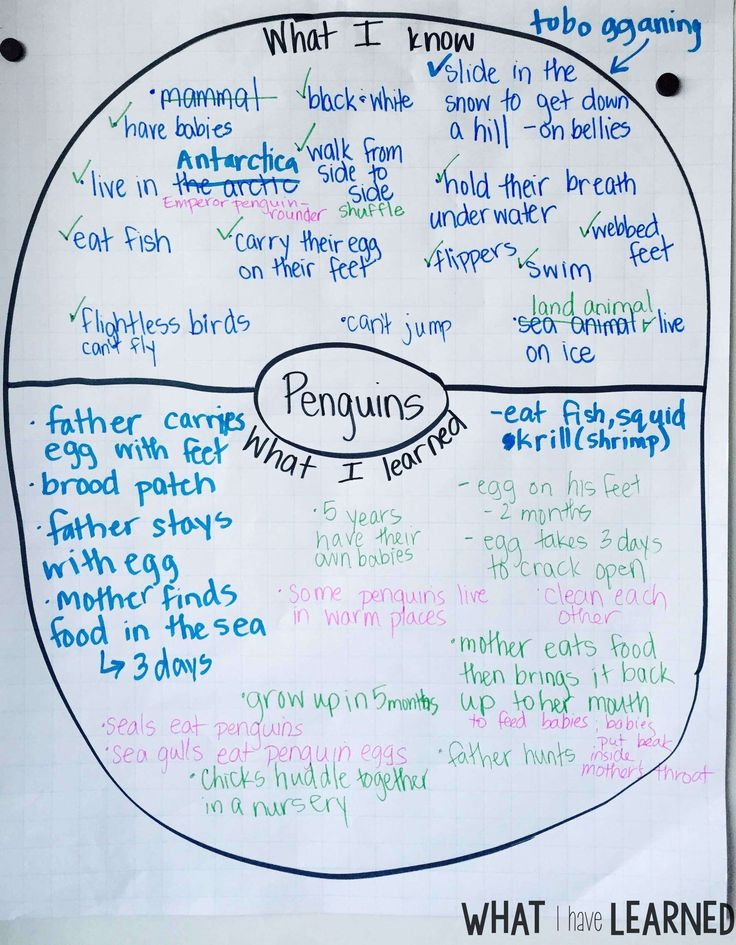 All About Penguins – Informational Reading and Writing for the First Week in January
