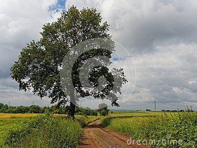 Single tree and road across field
