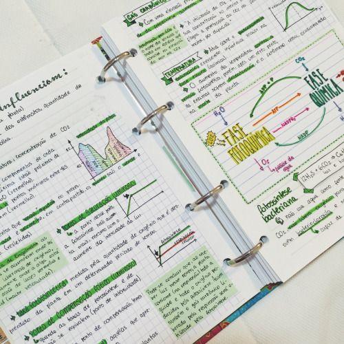 "getstudyblr: "" 11 . 06 . 2016 // more photosynthesis notes! "":"