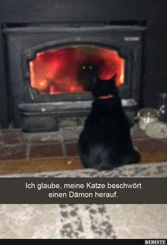 Ich glaube, meine Katze beschwört einen Dämon herauf.. | Lustige Bilder, Sprüche, Witze, echt lustig